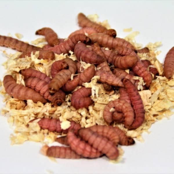 Bienenmaden rød bæger